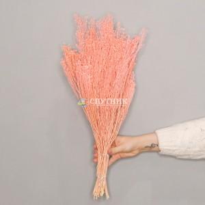 Брум персиковый