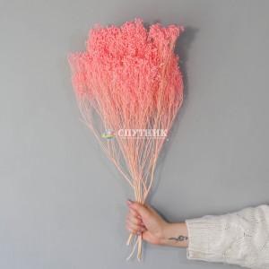 Брум розовый