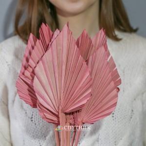Копье розовое