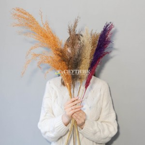 Пампасная трава (кортадерия) цветная микс 85 см