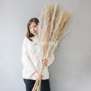 Пампасная трава (кортадерия) натуральная 120 см
