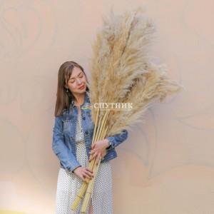 Пампасная трава (кортадерия) белая 110 см