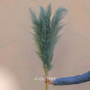 Пампасная трава (кортадерия) цветная микс 110 см