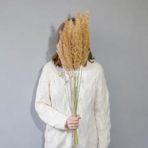 Пампасная трава (кортадерия) натуральная 75 см