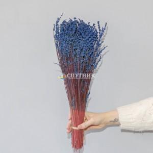 Лаванда стабилизированная синяя
