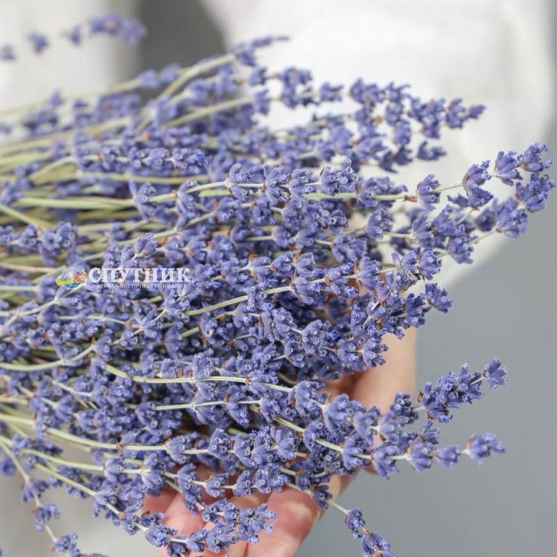 Купить сухоцвет лаванда недорого в СПб