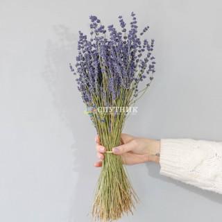 Лаванда сухоцвет | Dried Lavandula