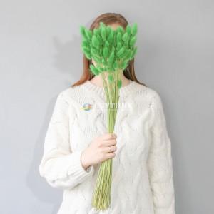 Лагурус зеленый