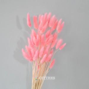 Лагурус розовый