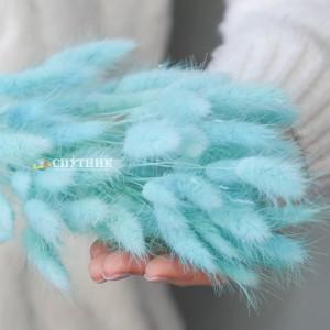 Лагурус голубой