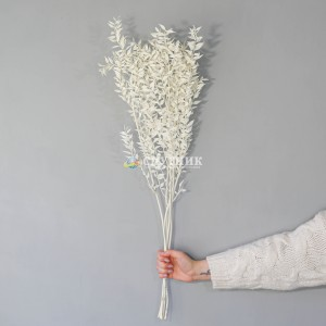 Рускус стабилизированный белый