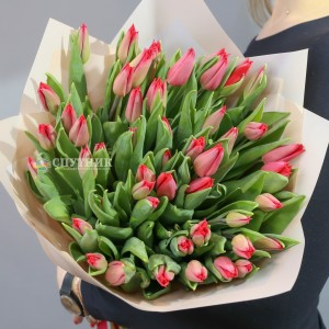 Букет тюльпаны красные 50 шт / 2'990 руб