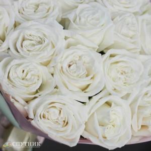 Букет 25 роз Плайя Бланка / 2'900 руб