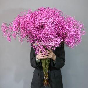 Гипсофила розовая | Gypsophila Dark Pink