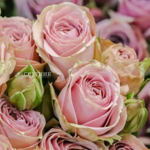 .Роза кустовая Пинк Иришка | Pink Irishka Spray Rose