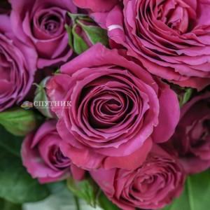 .Роза кустовая Сплендид Иришка | Splendid Irishka Spray Rose