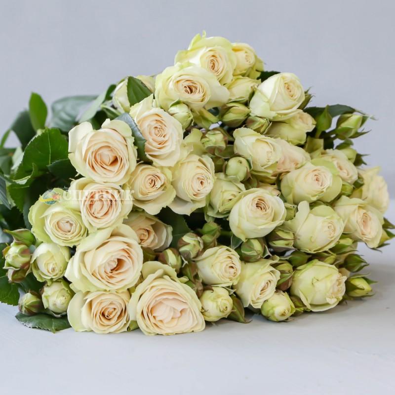 Купить белые кустовые розы Вайт Иришка оптом и в розницу в СПб
