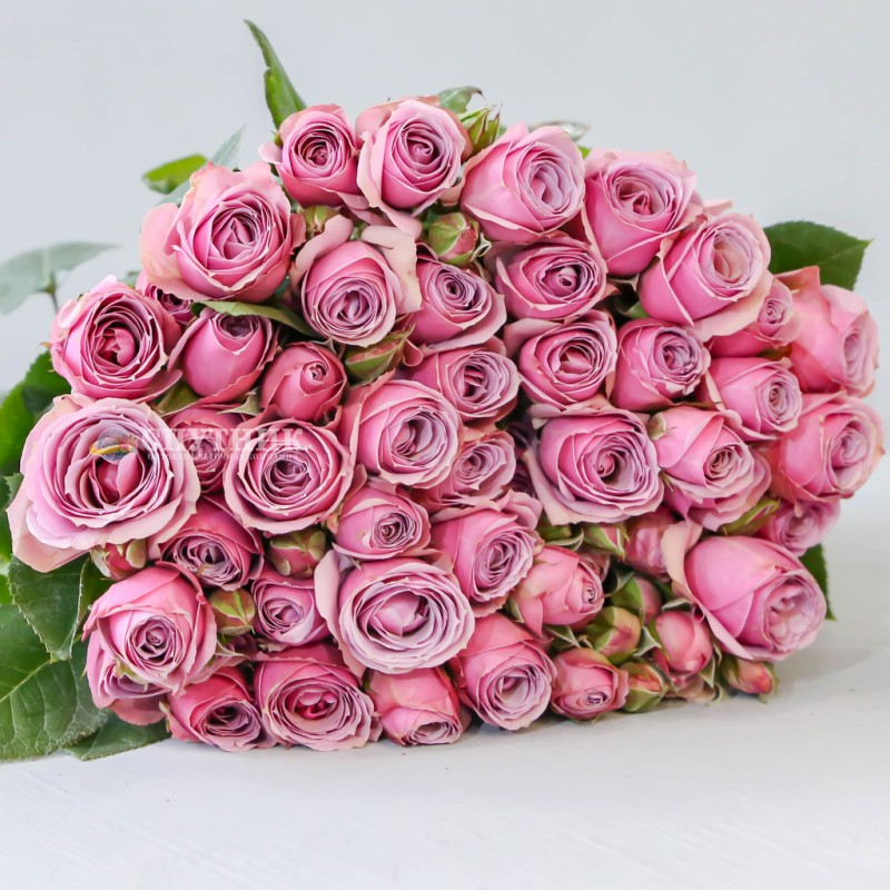 Купить кустовую розу Лавандер Иришка в СПб Оптовая