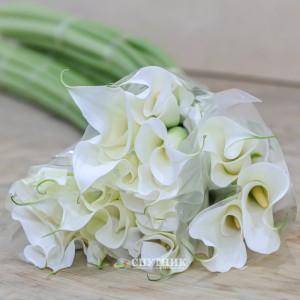 Калла белая   White Calla