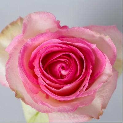 Роза Эсперанса  | Rose Esperance