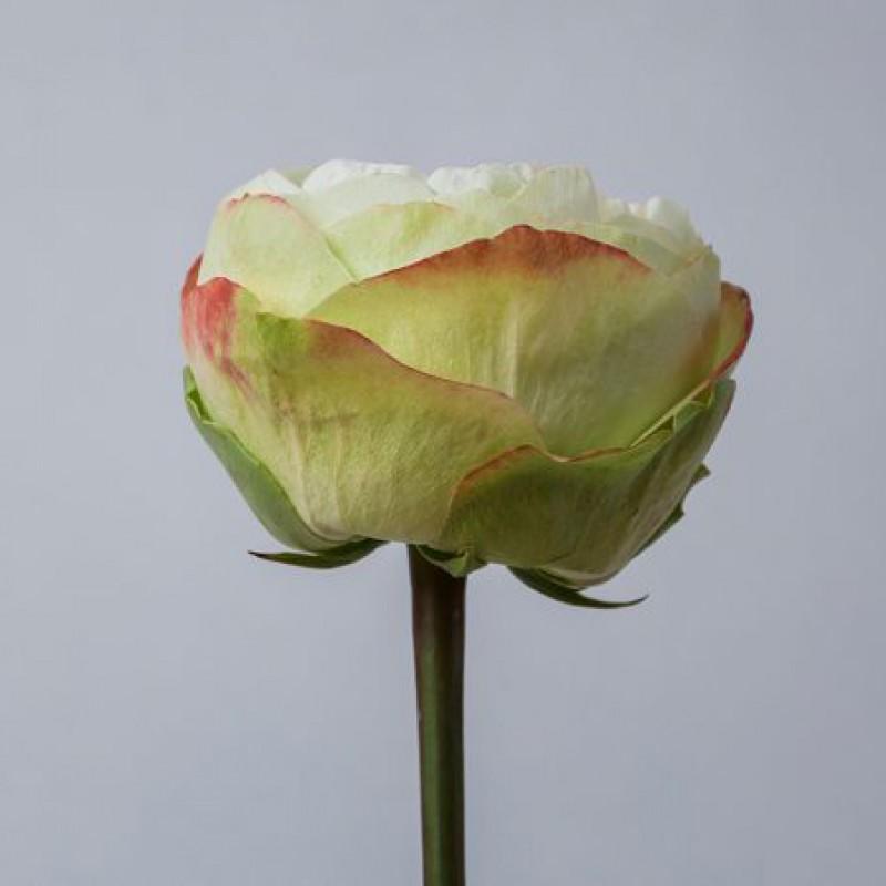 Розы Кхела заказать