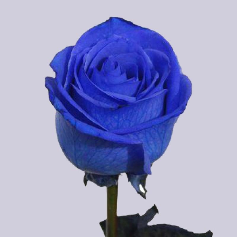 Купить синие розы в спб