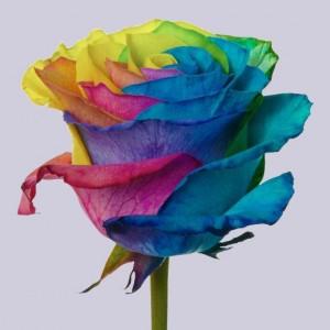.Роза Тинтед Рейнбоу | Tinted Rainbow Rose