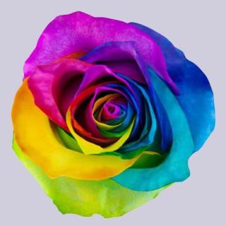 !ХИТ! Роза радужная | Tinted Rainbow Rose