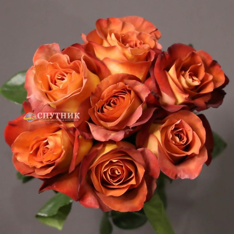 Заказать розы Кофе Брейк в Спб