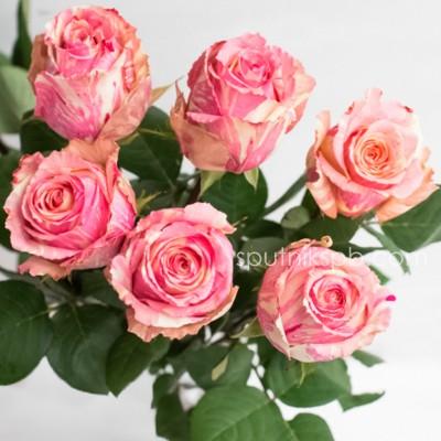Оптовая цветочная база «Спутник»: купить розы Fiesta оптом