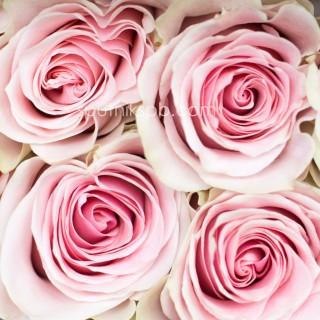 Оптовая цветочная база «Спутник»: купить розы Fruttetto оптом