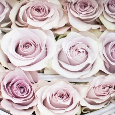Роза Safi