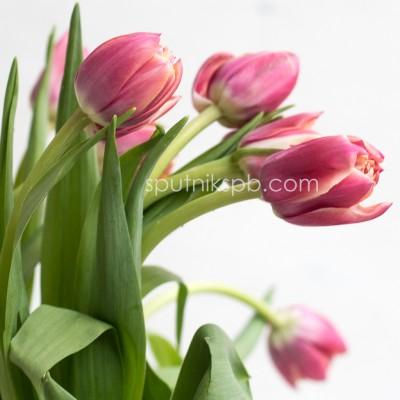 Оптовая цветочная база «Спутник»: купить тюльпаны Columbus оптом