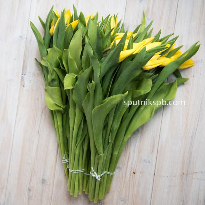 Купить желтые тюльпаны оптом в спб