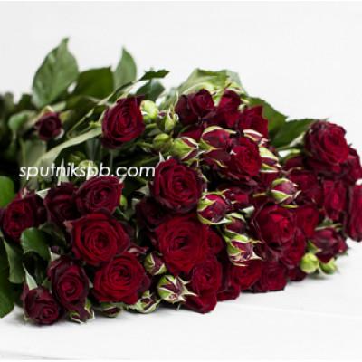 Кустовая роза Angelique