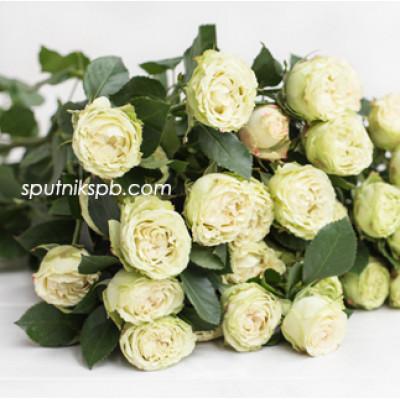 Кустовая роза Bamboo