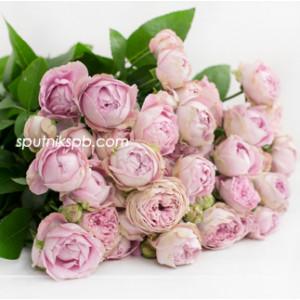Кустовая роза Blason Bubbles