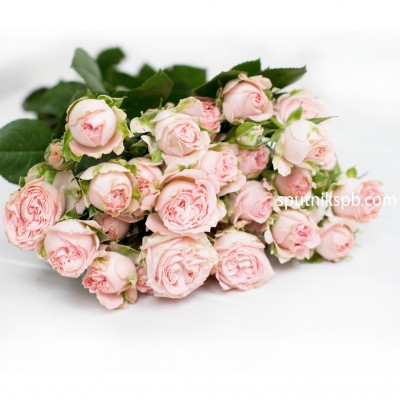 .Роза кустовая Бомбастик | Bombastic Spray Rose