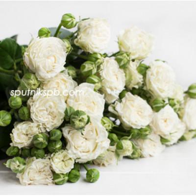 Кустовая роза Bridal Flow