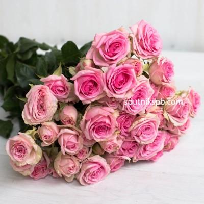 Кустовая роза Dinara