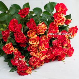 Кустовая роза Fire Flash
