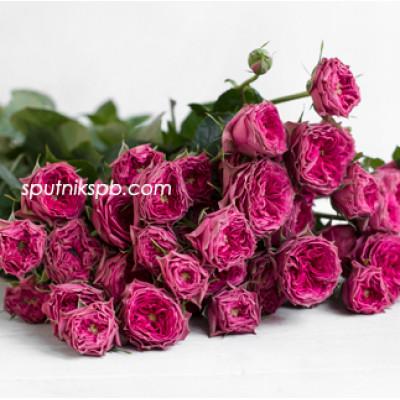 Кустовая роза Grandma Joshy