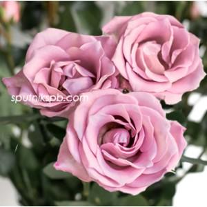 Кустовая роза A-Lady