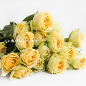 Кустовая роза Bandolero
