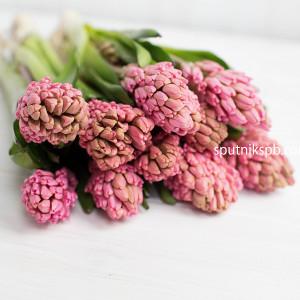Гиацинт розовый