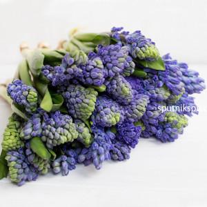 Гиацинт синий Delft Blue