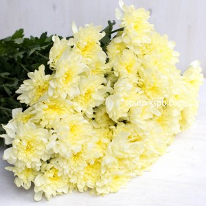 Хризантема кустовая Зембла Крем