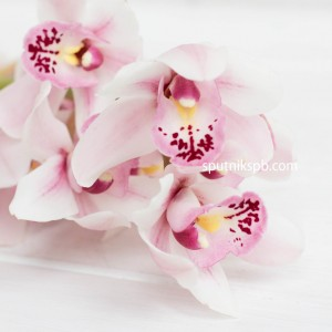 Орхидея нежно-розовая | Light Pink Orchid