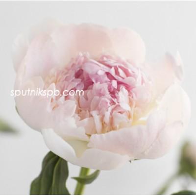 Оптовая цветочная база «Спутник»: купить оптом