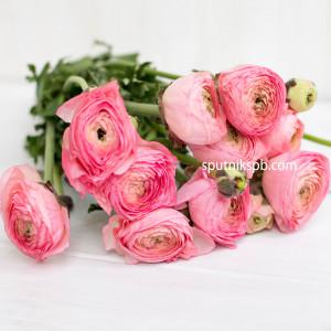 Ранункулюс Light Pink